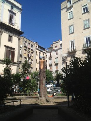 "Cedro libanese abbattuto al centro storico a causa di un ramo ""penzolante"". Fonte: Agora Vox"