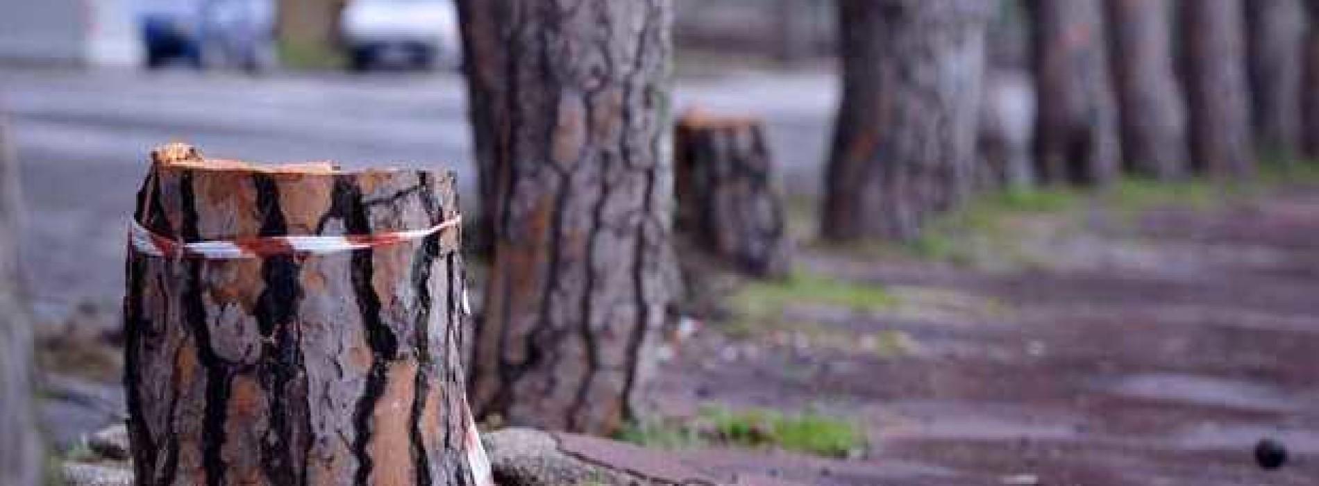 """La mattanza degli alberi """"napoletani"""""""