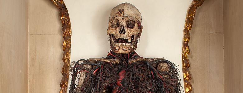 Macchine Anatomiche Fonte: museosansevero.it