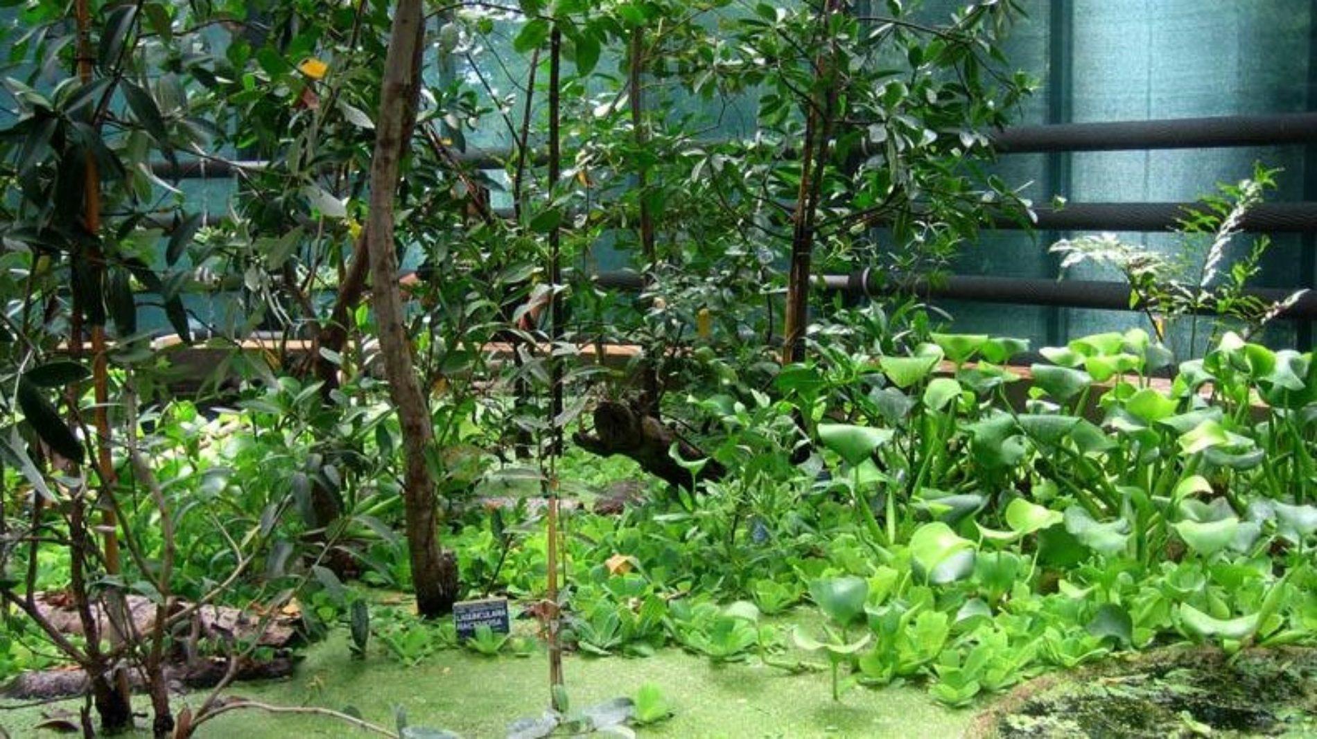"""Orto Botanico di Napoli: arriva la IV edizione di """"Planta il giardino e non solo"""""""