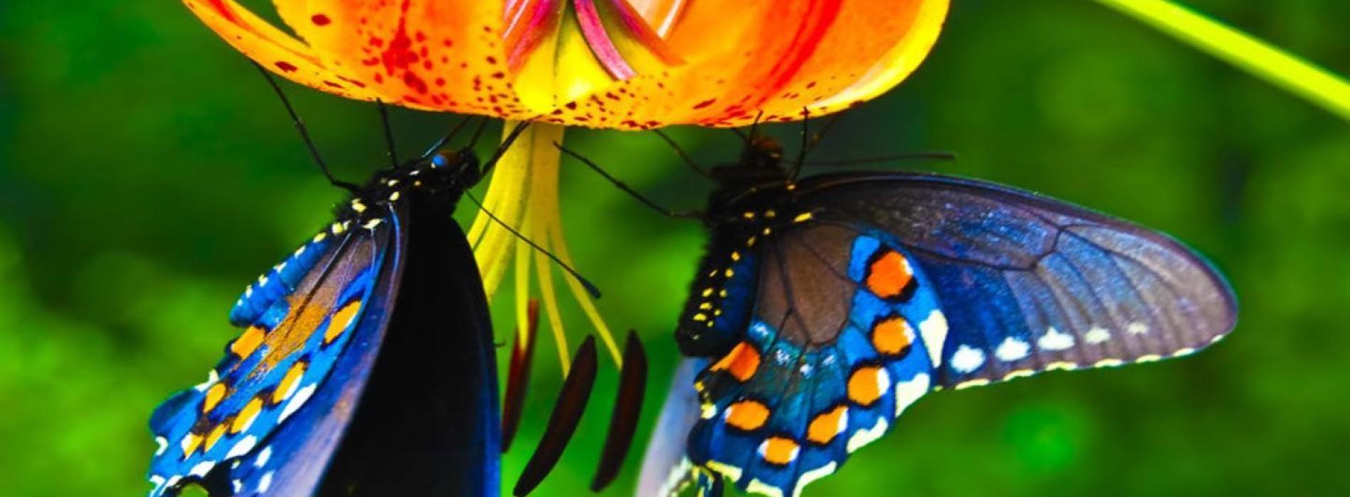 """""""L'Universo delle Farfalle"""": una mostra presso l'Orto Botanico di Napoli"""