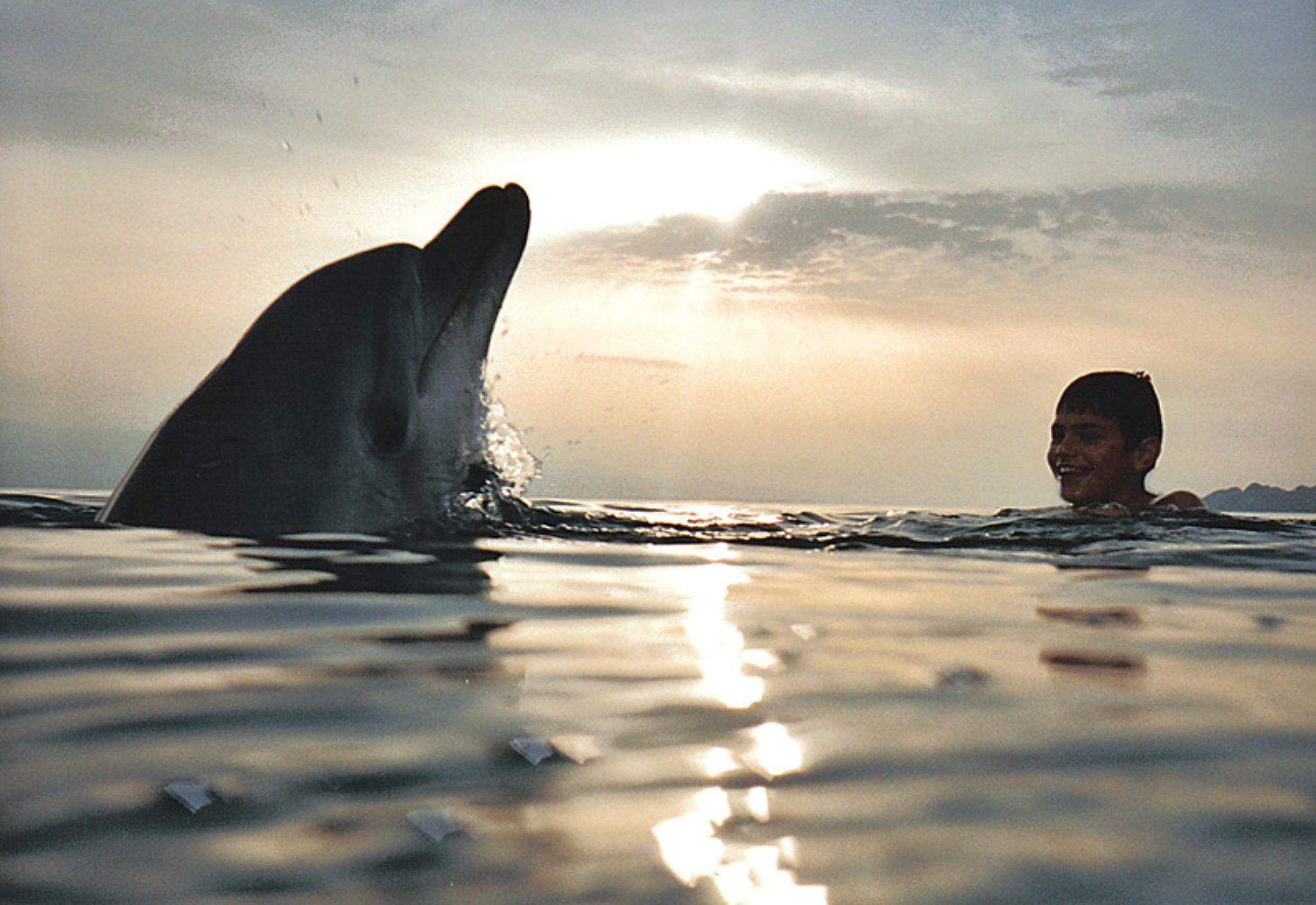 Lago Lucrino: la leggenda del delfino Simone e del suo piccolo amico