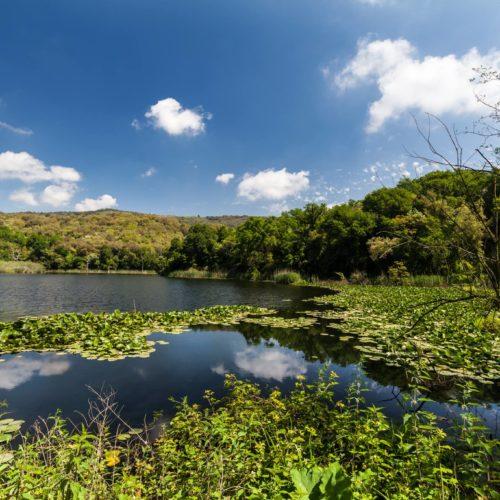 Oasi WWF Cratere degli Astroni: un cuore verde tutto napoletano