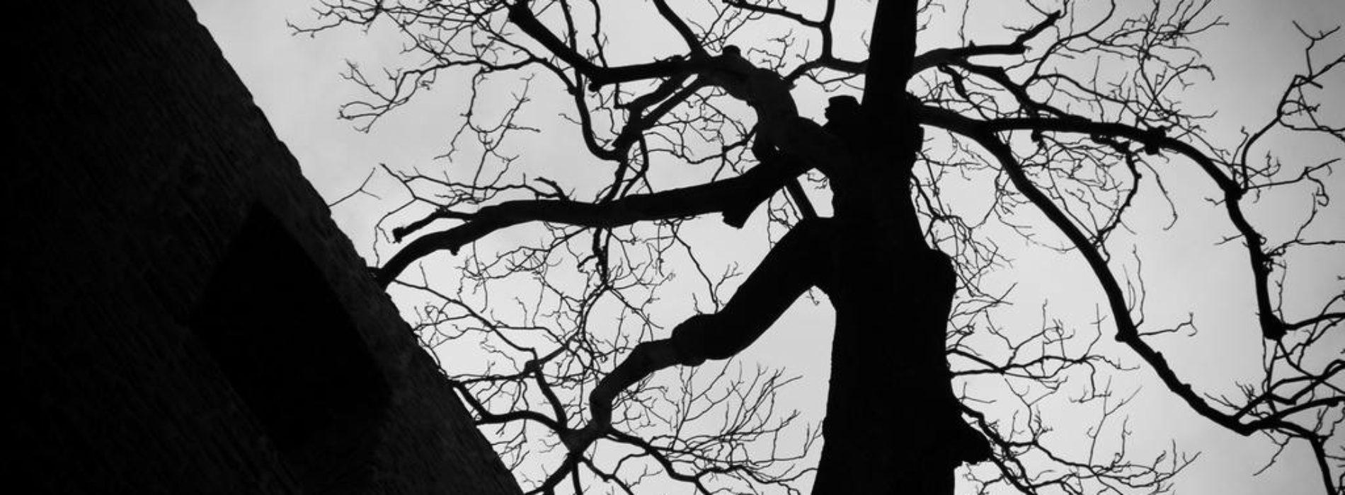La donna albero: un caso sconvolgente