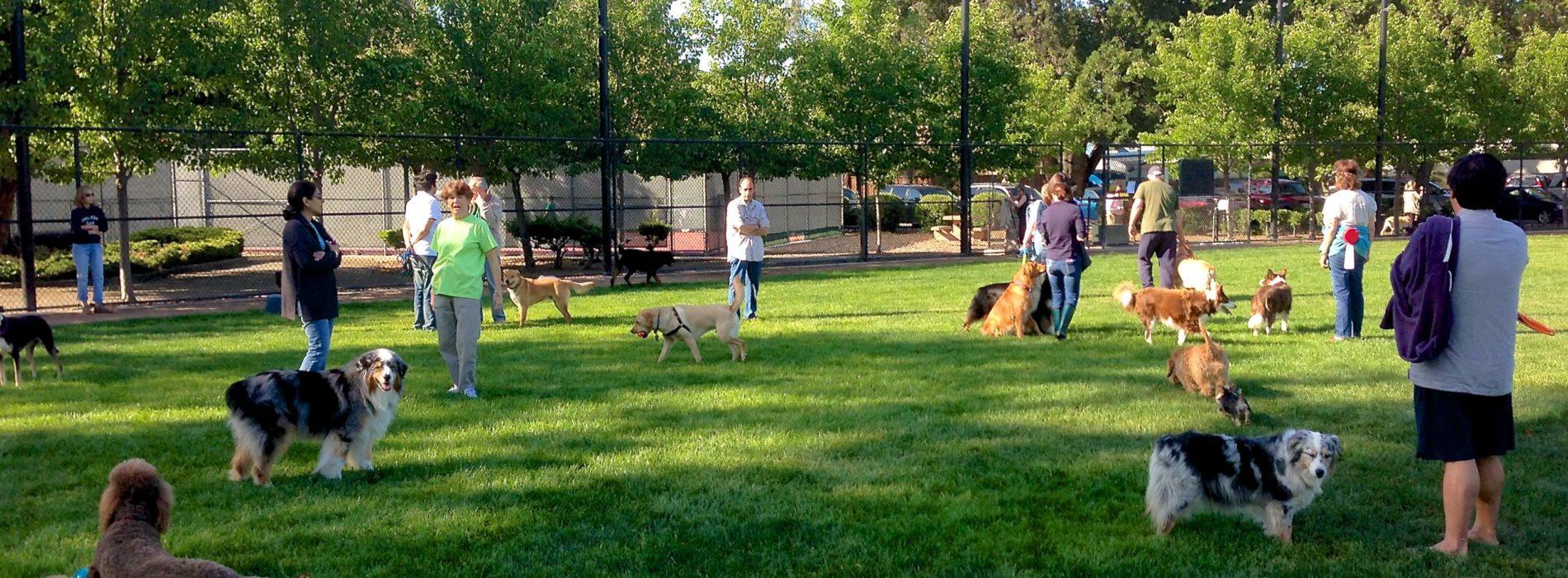 Dogs Park di Pianura: un'area interamente dedicata ai cani