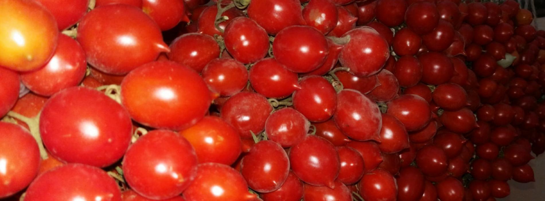 Il Pomodorino del Piennolo del Vesuvio | NapolinLove